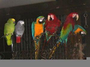 Recueil pour perroquet en milieu familiale 100% honnete