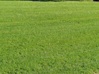 Lawn Mowing in Shoreham-By-Sea, Just £5
