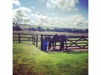 *THE STABLES *BEAUTIFUL BARN CONVERSION IN THE WELSH COUNTRYSIDE* Beaches, Castles, Relaxation!