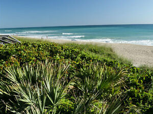 Fantastic Beachfront Condo on Hutchinson Island, Stuart, Florida