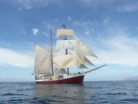 Chef for a tall ship wanted