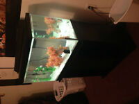 40 Gallon Fish tank + 20 Gallon Fosh Tank.