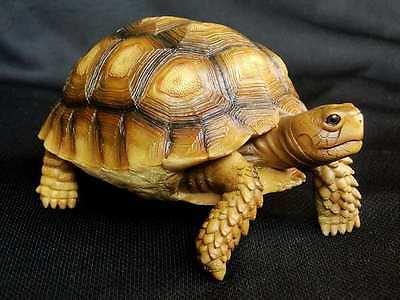 Geochelone sulcata Sulcata tortoise model replica ornament sculpture turtle