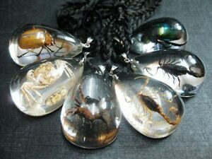 12 Pc lots insect beetle In Acrylic Resin scorpion spider Gift Pendant new
