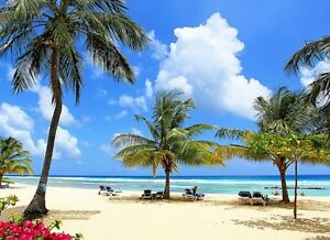 Win a FREE CARIBBEAN CRUISE Vacation with EXPEDIA! Peterborough Peterborough Area image 1