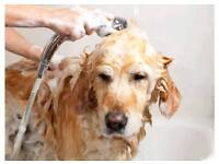 Experienced dog groomer required