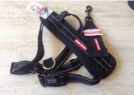 Brand new small dog harness & seat belt bought for £35