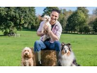 Tickets for Dogfest Bristol - bargain price