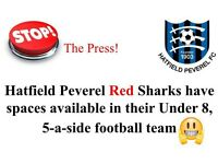 Hatfield Peveral Red Sharks (Under 8)