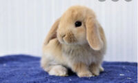 Looking for a baby bunny/bunnies!!