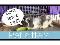 Rabbit/Cat sitter Surrey and Berkshire