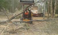 A1 Tree & Stump Removal