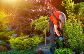 Gardeners & Landscapers & Handyman