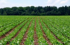 Farm land to rent Meaford, Walters Falls areas