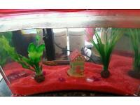 Fish tank with fish pumps and spares £10