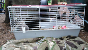 2 rabbits and cage with water bottle