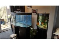 Juwel vision 260 black wood fish tank