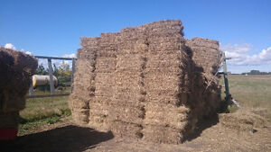 Square Bales For Sale - Tame Hay - Aprox 550 bales