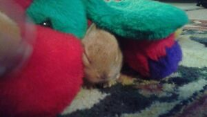 free 8 weeks baby bunnies with mom and two kitten 7 monts old