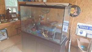 Aquariums 3 10s 2 20s and the 115 gallon