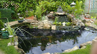 Want a good home for your Koi , I can pay small price