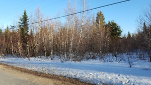100 acres of woodland in kent county, nb
