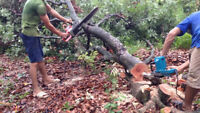Small Tree Cutting And Removal Service