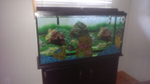 Fish, tank and stand