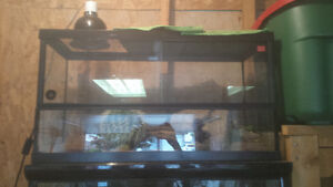 2 leopard geckos and everything needed Peterborough Peterborough Area image 5
