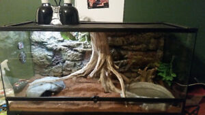 Corn Snake for Sale with Terrarium