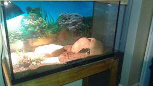 Reptile tank with accessories and stand  $$150