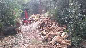 Need your wood split?? I will do it for you. Cambridge Kitchener Area image 6