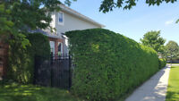 Professional Hedge Trimming Service for West End Ottawa