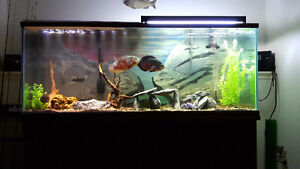 165 gallon fish tank and stand