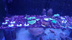 $10 Coral Frags  Saltwater
