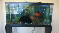 35 gallon aquarium & Stand