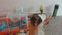 Hamster for sale***** Comes with accesories