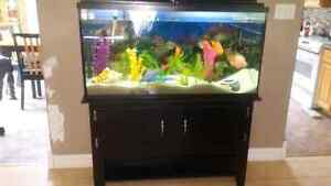 65 Gallon  fish tank/stand/fish