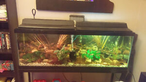 african cichlids for sale differnt kinds and sizes 2.50 and up Windsor Region Ontario image 4