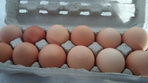 Coaldale! Eggs for sale!