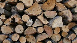 Bonfire bundles/camping firewood