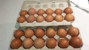Fresh Brown Eggs for sale