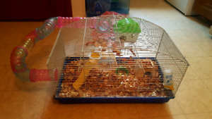 Dawrf Hamster with cage and accessories $50