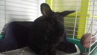 Small black bunny for sale here