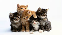 Cat Litter Box Cleaning Services in Durham Region