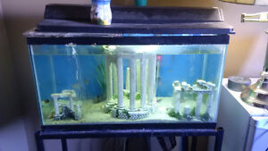 20 Gallon Tank with Everything Included