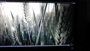 New , Wide LCD monitor Samsung  1920 x 1080   --(SOLD!  )
