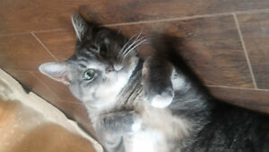 Free 3 year old female tabby to good home