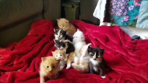 8 gorgeous kittens looking for forever homes
