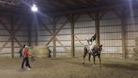 Equestrian Vaulting Lungeur
